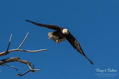 Bald Eagle launch and flight sequence - 5 of 21