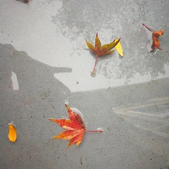 Leaves in a puddle... (Beeke...) Tags: minimalist fallautumn puddles colordleaves white orange poetic water wet sunshine