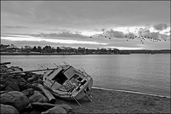 Heading South (HereInVancouver) Tags: sailboat slope wrecked aground deadinthewater beach water ocean pacific englishbay canadiangeese inflight headedsouth blackandwhite bw outdoors vancouver bc canada canong16 vancouverswestend