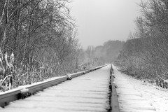 First Snow 10-27-2017 013 (wogggieee) Tags: bear lake mn minnesota white whitebearlake colors county fall hugo pretty ramsey snow trees washington winter unitedstates us