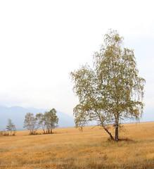 IMG_1072 (3) (Amir Guso) Tags: trees tree baum autumn herbst landschaft feld hike wandern reisen bosnia landscape bäume canon 70d eos nature natur bosniaandherzegovina