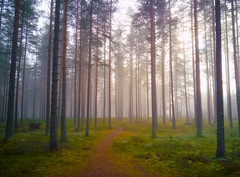 Cycling in misty forest (VanhalaK) Tags: finland hikiä misty fog foggy mist forest woods trail fall autumn oneplus oneplustwo mobile outdoors view scenery amazing path silence magic magical wood light colors green cycling bike cyclocross