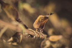 (C-47 [Offline]) Tags: autumn flora leaf colors singleleaf composition steel madeofsteel outofnature objectinnature macro macrolife yellow art artistic artistique flickr feel feelings helios44258mm vintage 7dmarkii