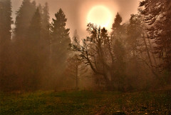 In the fog, Swiss autumn time, Combe Grède. Canton of Berne . Switzerland. No. 367. (Izakigur) Tags: raw switzerland svizzera lasuisse lepetitprince thelittleprince ilpiccoloprincipe helvetia liberty izakigur flickr feel europe europa dieschweiz ch musictomyeyes nikkor nikon suiza suisse suisia schweiz suizo swiss سويسرا laventuresuisse myswitzerland landscape alps alpes alpen schwyz suïssa luz lumière light licht ضوء אור प्रकाश ライト lux światło свет ışık lacombegrède chasseral jura autumn automn trees tree fall herbst automne autunno outono 秋 पतझड़ خريف پاییز סתיו nikond200 nikkor1755f28 cantonofbern sun thehobbit lehobbit