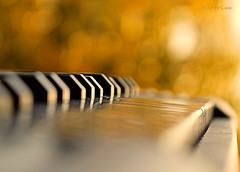 .. with Autumnal Bokeh ... (MargoLuc) Tags: macromondays theme memberschoice musicalinstruments macro golden bokeh sunlight mini keyboard sunset