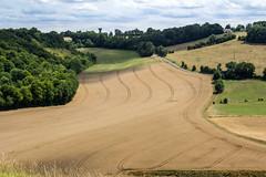 les agriculteurs sont des artistes. oise.picardie. (roland.grivel) Tags: plaine blé plantation agriculture agriculteur paysan artiste oise picardie graphisme