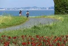 The girls of isle of Rhea (JLM62380) Tags: isleofrhea ilederé girls bike bicycle poppies field sea road nature flowers ngc