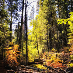 Fall Colors on the Arnold Rim Trail (tony perrie) Tags: california arnoldcalifornia redwoods arnoldrimtrail arnold rimtrail art