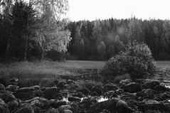Wild (Stefano Rugolo) Tags: stefanorugolo pentax k5 kepcorautowideanglemc28mm128 lensflares vintagelens monochrome blackandwhite nature rocks forest tree pond water birch backlight hälsingland sverige sweden wild landscape autumn field sky rock grass wood
