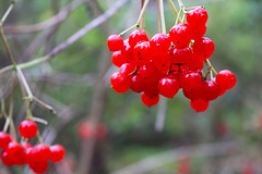 "berries • <a style=""font-size:0.8em;"" href=""http://www.flickr.com/photos/60431041@N08/24048835438/"" target=""_blank"">View on Flickr</a>"