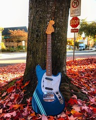 Fall is in the Air (Pennan_Brae) Tags: vancity guitarphotography fall autumnleaves autumn musicphotography offsetguitars offsetguitar shortscale electricguitars fenderguitar fenderguitars guitar electricguitar fendermustang fender