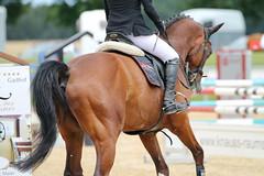_MG_6140 (dreiwn) Tags: ridingarena reitturnier reiten reitplatz reitverein reitsport ridingclub equestrian showjumping springreiten horse horseback horseriding horseshow pferdesport pferd pony pferde tamronsp70200f28divcusd