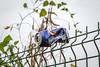 Fly On The Wall (Jomak1) Tags: 2017 bricklane london rps swgroup september shoreditch jomak1 photowalk streetphotography