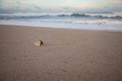 Outer Banks (yoshiffles) Tags: beach nc northcarolina ocean outerbanks shell waves