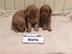 Ginger Girls pic 3 10-15