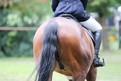 _MG_5814 (dreiwn) Tags: ridingarena reitturnier reiten reitplatz reitverein reitsport ridingclub equestrian showjumping springreiten horse horseback horseriding horseshow pferdesport pferd pony pferde tamronsp70200f28divcusd