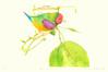 Gouldian finch (Japanese Flower and Bird Art) Tags: bird gouldian finch chloebia estrildidae takako hirano modern intaglio print japan japanese art readercollection gouldiae