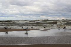 Wet feet (LauraWentz) Tags: michigancity lakemichigan beach waves gulls ringbills afterthestorms
