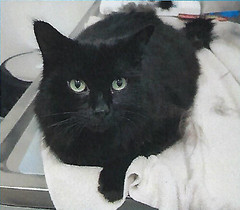 Axel - 6 year old neutered male