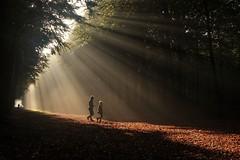 Catching the sunlight (peeteninge) Tags: sunrays sun mist fog zonnestralen sunbeams forrest bos trees bomen sonyrx10 sony