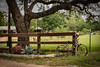 Happy Fence Friday (Jims_photos) Tags: wimberleytexas texas trees unitedstates outdoor outside oldmemories oldfence adobelightroom adobephotoshop shadows daytime fencefriday happyfencefriday jimallen jimsphotos jimsphotoswimberleytexas lightroom landscape nopeople nikond750 memories
