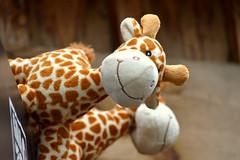 DSC_0323 (kerekparos) Tags: gaiazoo zoo kerkrade