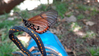 Butterfly - Hennops River Hiking Trail