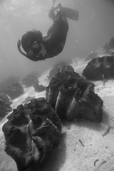 Lala and the Clams (PacificKlaus) Tags: bolinao clams giantclam freediver ocean underwater