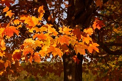 2017-10-29_11-43-47 (CU TEO MD) Tags: fall autumn leaves tree outdoor ngc twop soe artofimages simplysuperb sony a6300