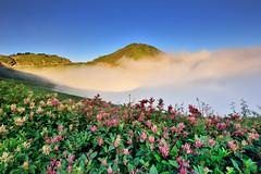 合歡山主峰~虎杖花雲海 ~ (Shang-fu Dai) Tags: 台灣 taiwan 南投縣 仁愛 合歡山 雲海 hehuan nikon d800e afs1635mmf4 landscape 虎杖花 formosa 3416m 3417m 合歡主峰 主峰 雲 戶外 天空 風景