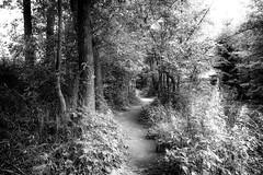 Path (pszcz9) Tags: przyroda nature natura ścieżka path drzewo tree pejzaż landscape beautifulearth sony a77 bw black monochrome czarnobiałe