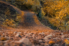 Into Fall (aevo69) Tags: andy evans andyevanscreations fall autumn leaves golden light winter forest walking trekking paths