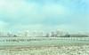Gathering of Geese. (Alex-de-Haas) Tags: smorgens 50mm d5 hdr january nederland nederlands netherlands nikkor nikkor50mm nikon nikond5 noordholland schoorldammerbrug thenetherlands westfriesland bevroren birds bridge brug cold daglicht daylight fog foggy freezing frozen handheld haze hazy highdynamicrange januari kou koud landscape landschap licht light meadows mist misty morning nevel nevelig ochtend vogels vrieskou weiland winter