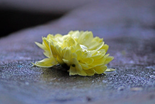 Some last Flowers