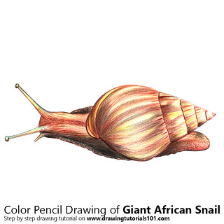 Giant African Snail with Color Pencils [Time Lapse]