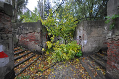 Abramowski's cells after the storm (rafasmm) Tags: lodz łódź poland polska europe city citycenter citynature street streetphoto storm tree fallen autumn cellars cell color