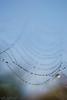 Misty webs (Joelle Rademakers Fotografie) Tags: mist fog dew dewdrops drops macro nikon nikonphotography d3100 webs spiderwebs web nature naturelovers fall september 2017 netherlands garden morning