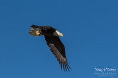 Bald Eagle launch and flight sequence - 13 of 21