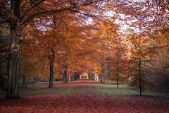 Moretusbos (Jan Bogers) Tags: herfst automne bos d800 janbogers moretusbos autumn parc grenspark brabantsewal ravenhof fantasticnature forest forêt