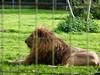 Parc des Félins, Lumigny-Nesles-Ormeaux (delphinecingal) Tags: parcdesfélins lumignyneslesormeaux félins animaux parcanimalier parczoologique zoo animals felines