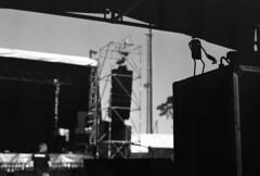"""Chausse Tes Tongs 2017"" (The Blue Water Lily's Company) Tags: fdrouet nb bw monochrome monochrom film analog nikon ilford chaussetestongs festival régie concert"