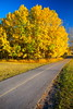 Autumn is in the air (stevenbulman44) Tags: tree color landscape sidewalk grey blue sky polarizer filter canon 2470f28l calgary alberta park