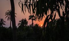 Kolkata - Sunderban tour-53
