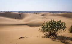 Rajasthan - Jaisalmer - Desert Safari with Camels-6