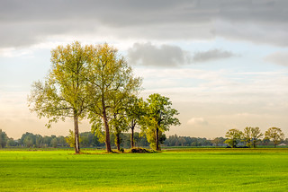 Row of trees in early morning sunlight