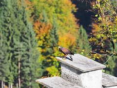 PA114294 (RiverboyChen) Tags: 國外旅遊 歐洲 奧地利 維爾芬 鷹堡 hohenwerfencastle