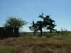 Silhouettes (jHc__johart) Tags: weeds oklahoma abandonedbuilding abandoned