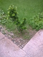The side of the lawn (zohaibusmann) Tags: zohaibusmanphotography lawn soil plants grass garden lawnmaintence stones greengrass greenplants