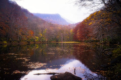 Tranquil Lake (moaan) Tags: towada aomori japan jp lake pond water surface reflections woods forest mountains serenity autumn fall autumncolors fallcolors travel travelphotography travelogue iphone iphone5 iphonography utata 2017 tsutanuma