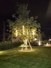 """Albero con Grappoli LED • <a style=""""font-size:0.8em;"""" href=""""http://www.flickr.com/photos/98039861@N02/37724583886/"""" target=""""_blank"""">View on Flickr</a>"""
